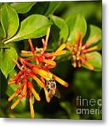 Honey Bee 6 Metal Print