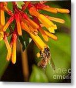 Honey Bee 7 Metal Print
