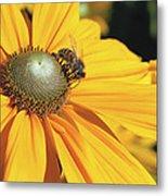 Honey Bee And Yellow Dahlia Flower Metal Print