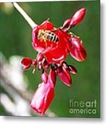 Honey Bee At Work Metal Print