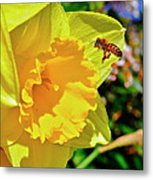 Honey Bee Metal Print