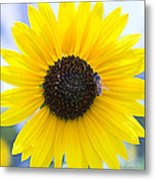 Honey Bee On Wildflower Metal Print