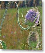 Honey Bee Picks Up Pollen Metal Print