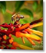 Honey Bee Profile Metal Print