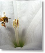 Honey Bee Up Close And Personal Metal Print