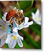 Honeybee And Squill Metal Print