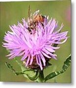 Honeybee At Work Metal Print