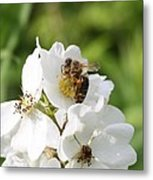 Honeybee Hands Metal Print