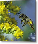 Honeybee In Flight Metal Print