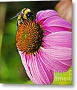 Honeybee On Echinacea Flower Metal Print