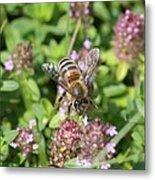 Honeybee On Heal All Metal Print