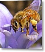 Honeybee On Hyacinth Metal Print