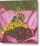Honeybee On Pink Zinnia Metal Print