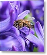 Honeybee Peeking Out Metal Print