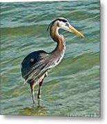 Honeymoon Island Heron Metal Print