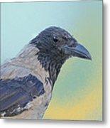 Hooded Crow Metal Print