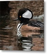 Hooded Merganser 2 Metal Print