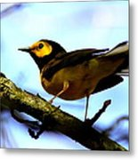 Hooded Warbler - Img 9290-002 Metal Print