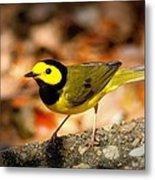 Hooded Warbler - Img 9352-003 Metal Print