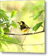 Hooded Warbler - Img_9274-007 Metal Print