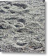 Hoof Prints In Sand Metal Print