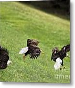 Hop Skip And Jump Metal Print