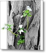 Hope... From Decay New Growth Metal Print