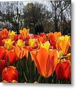 Hopping Hot Tulips Metal Print