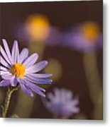 Horay Spine Aster Metal Print