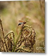 Hornet And Thorn Metal Print