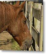 Horse 31 Metal Print