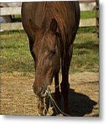 Horse 32 Metal Print
