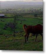 Horse And Farmhouse Metal Print