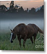 Horse And Fog Metal Print