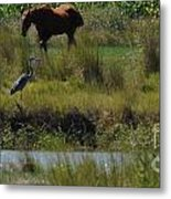 Horse And Friend Metal Print