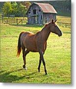 Horse And Old Barn In Etowah Metal Print