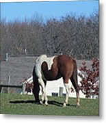 Horse And Shadow Metal Print