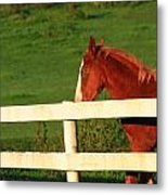 Horse And White Fence Metal Print