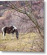 Horse And Winter Berries Metal Print