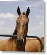 Horse Beauty Metal Print