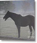 Horse Body Language  Metal Print
