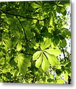 Horse Chestnut Leaves Metal Print