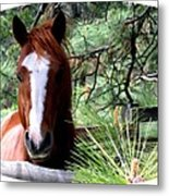 Horse Country Metal Print