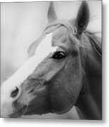 Horse Cutting Through Fog Black And White Metal Print