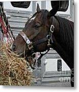 Horse Eating Hay Metal Print