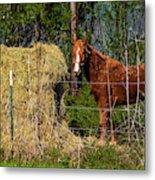 Horse Eating Hay In Eastern Texas Metal Print