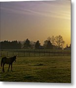 Horse Farm Sunrise Metal Print
