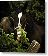 Horse Fence Metal Print