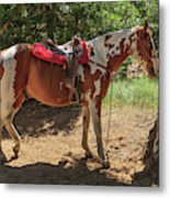 Horse For Rent South Lake Tahoe Metal Print