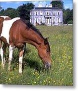 Horse Grazes Near St. Clerans Metal Print
